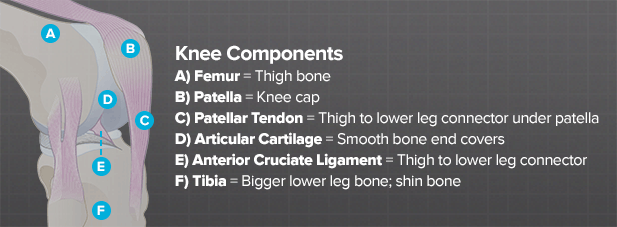 how does a knee function brainlaborg