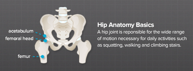 What Does a Hip Do? - Brainlab.org