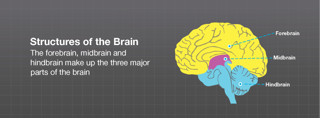 BrainlabOrg_Illustrations_BDR_21APR15_Page_10